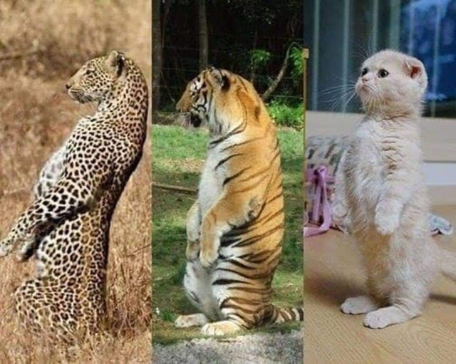 Cats are all the same no matter the size