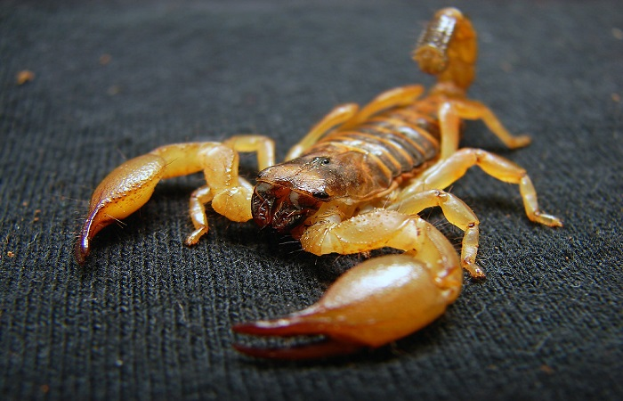 Passenger has a nasty surprise on United Airlines flight: A scorpion stung her.