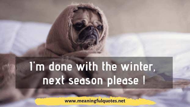 funny dog memes  pictures