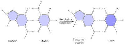 ikatan antar basa nitrogen