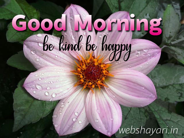 good morning images with rose for whatsapp