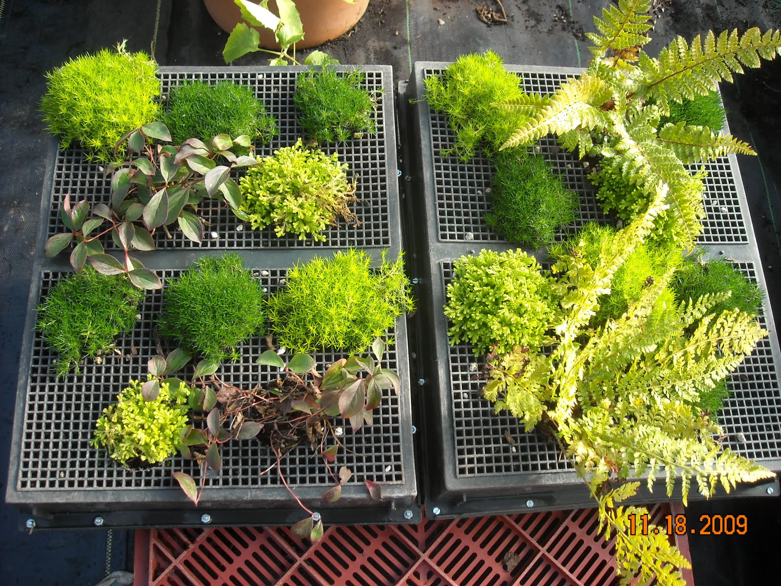 Livingwall10g Overview How To Build A Living Wall Vertical .