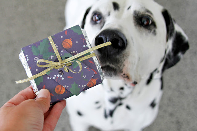 Dalmatian dog sniffing a homemade chocolate bar shaped dog treat with Christmas wrapper