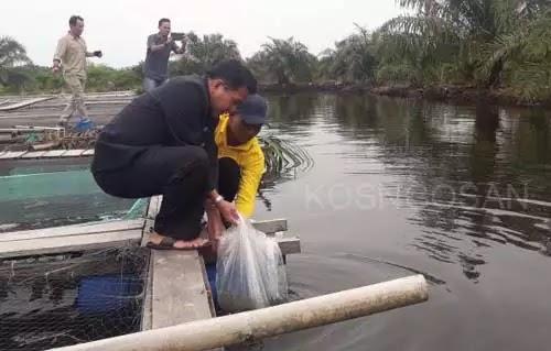 jurusan budidaya perairan