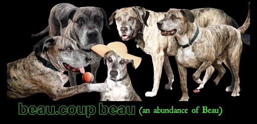 My Dog Blog