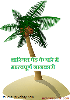 how to use coconut and eat it. nariyal ped ke bare me jankari. nariyal ko kaise upyog karte hain. coconut ke water yani pani ko peene se kya laabh hota hai. yah konsi bimari me ilaj ke liye sahi hota hai. coconut oil use karne se balo ko strong kiya ja sakta hai.
