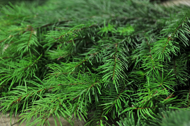 Douglas Fir for wreaths, boughs, and swags
