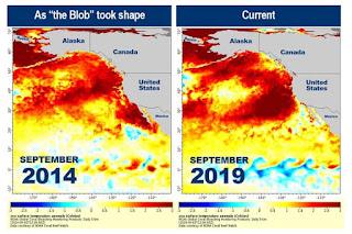 Extraña anomalía en las temperaturas del Océano Pacífico hasta niveles peligrosos.