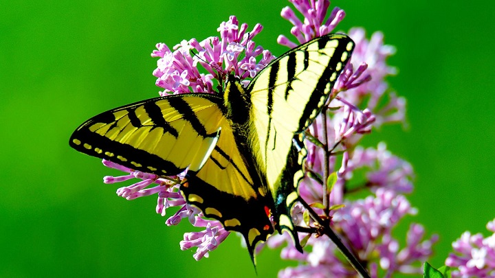 The number of butterflies in the United Kingdom has decreased by 50% since 1976 (Pixabay)