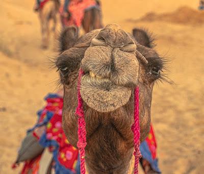 Jaisalmer Travel Guide1