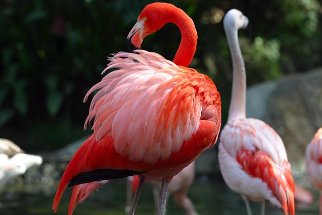 от чего зависит окраска животных