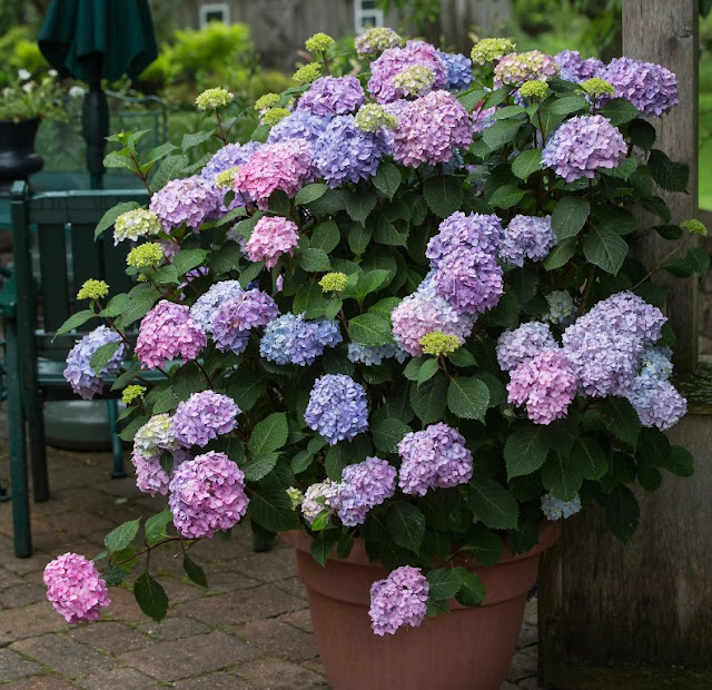Best Container Gardens Ideas