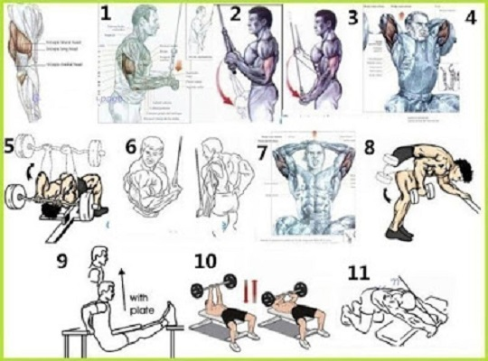 Best Group Exercises Triceps to Build Muscle
