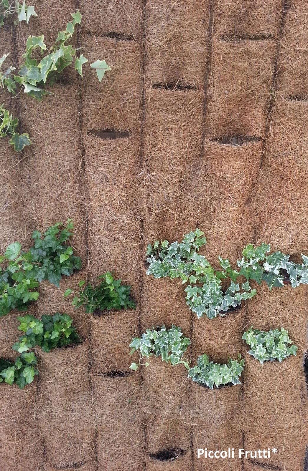 Piccoli frutti creare barriere verdi con un giardino for Giardino verticale