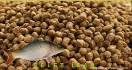 Pakan ikan arwana