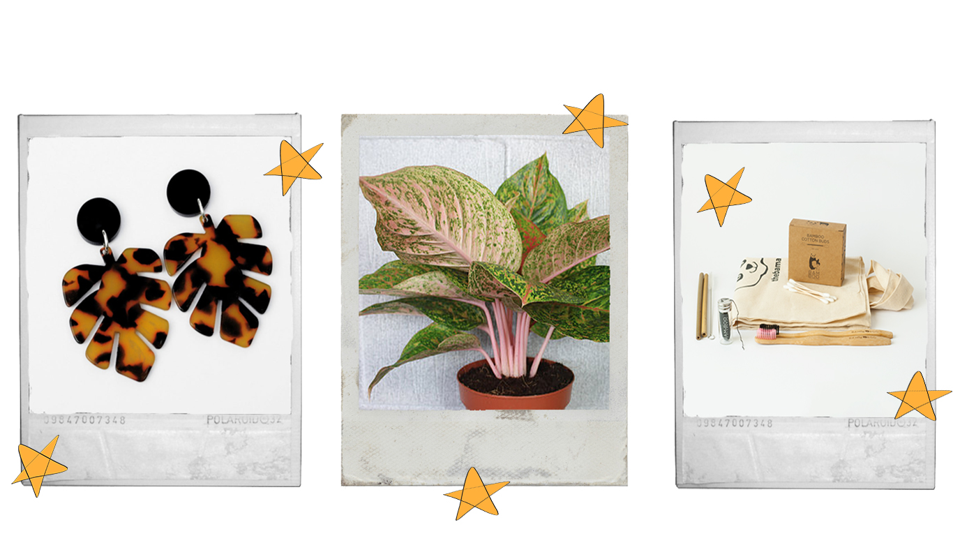 tortoiseshell monstera cheese plant leaf shaped statement earrings, houseplant with pink stems, sustainable gift set with toothbrushes, earbuds, floss, straws and tote bag