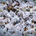 Prefeitura de SP sanciona lei para proibir utensílios plásticos
