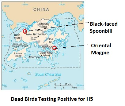Avian Flu Diary Oie Notification H5n6 In Hong Kong