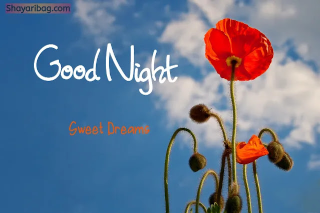 Good Night Flowers Images HD