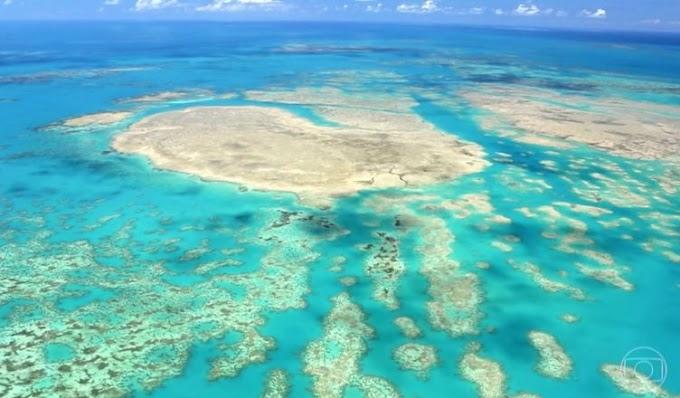 Morte de corais em massa ameaça biodiversidade no Sul da Bahia
