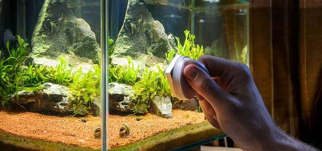 5 Best Tips To Control Aquarium Algae