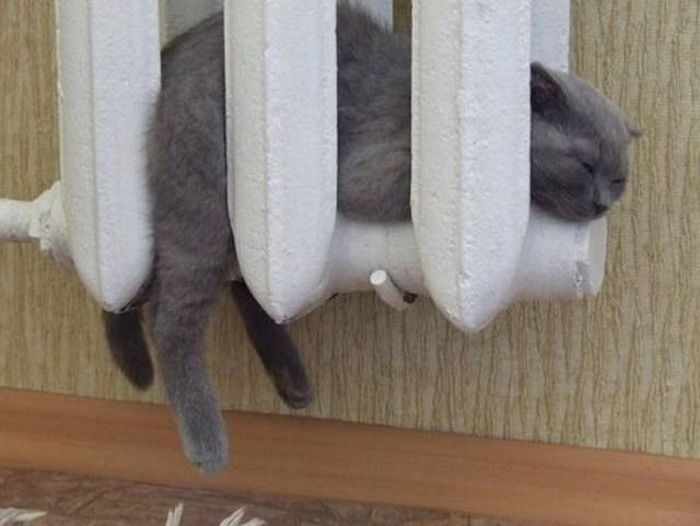 Funny cats - part 296, best cute cat picture, cute funny cat, adorable cat image