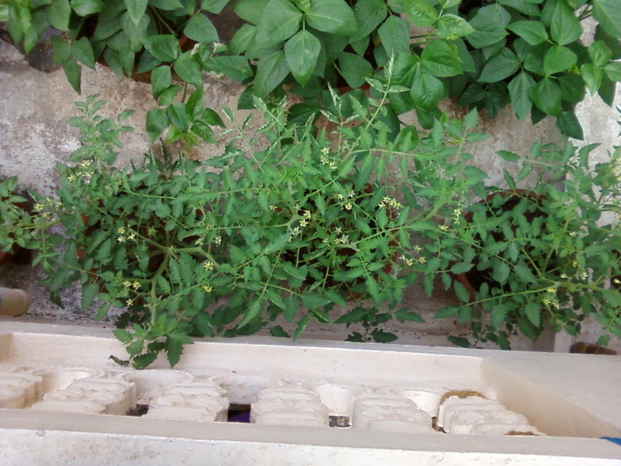 Teen's Kitchen Garden: Terrace Kitchen garden II