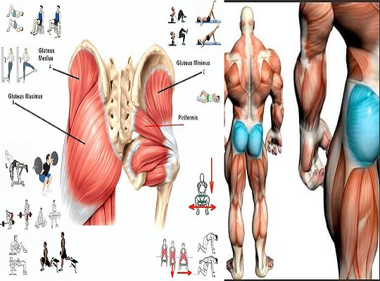 Exercises To Build Up Your Glutes And Firm Your Butt