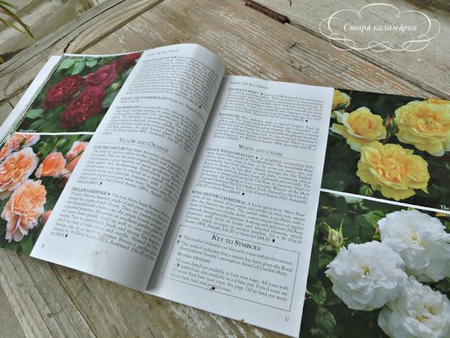 Розы Дэвида Остина, David Austin Roses