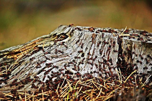 النمل،النمل الأبيض،مكافحة النمل الأبيض،النمل الأسود،النمل الأحمر،تزاوج النمل،النمل الطائر،النمل الأبيض الطائر،انتشار النمل،بيض النمل،ملكة النمل،أضرار النمل الأبيض،أعشاش النمل