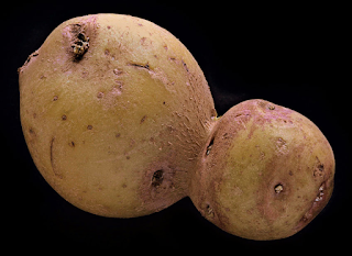 Jack's odd pomme de terre