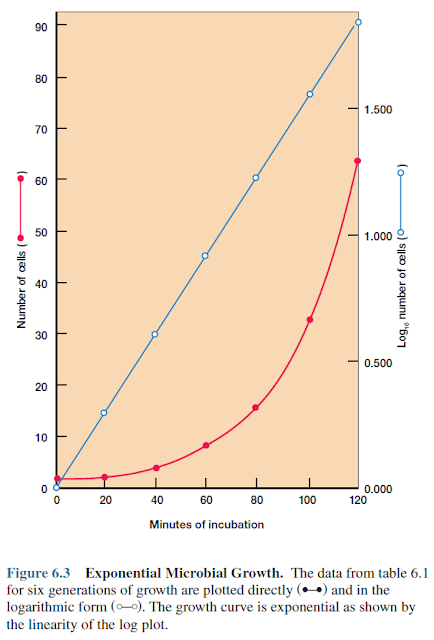 Exponential Microbial Growth