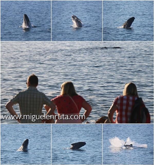 Avistamiento-ballenas-Sudáfrica