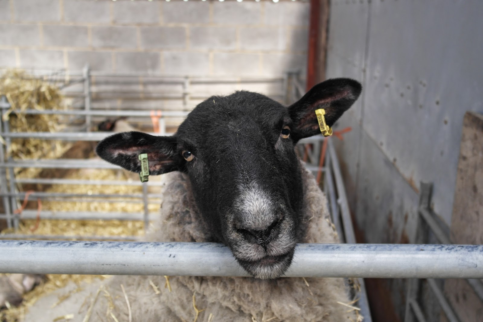 Sheep and Mead Open Farm