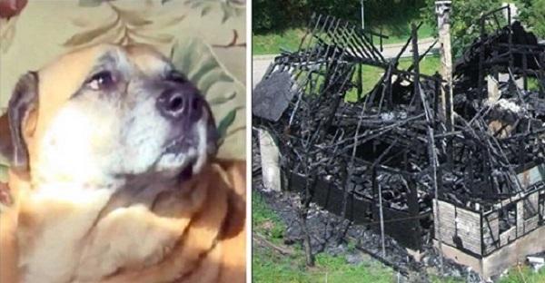 Спасенная от пожара собака через два месяца привела людей к черной дыре в сгоревшем доме