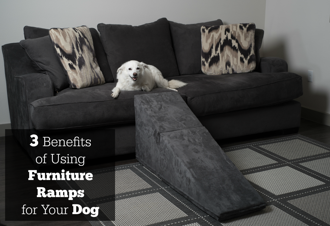 how can i stop my dog jumping on the sofa wooden for sale singapore 3 benefits of using furniture ramps your royal