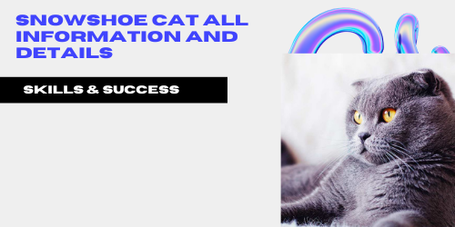 Snowshoe cat All Information And Details