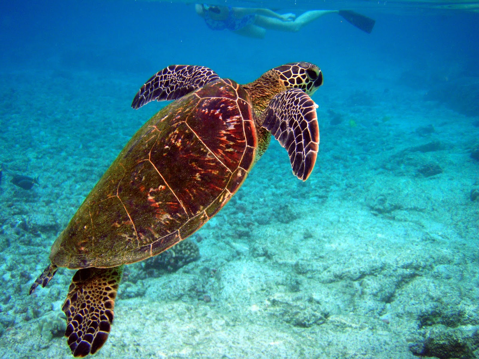 El Apareamiento De Las Tortugas Animals Of The World