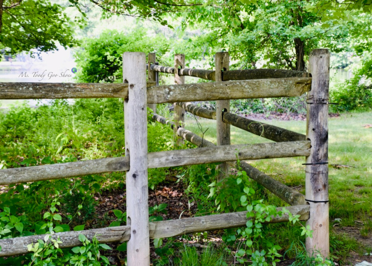 Wooden Fence _ Ms. Toody Goo Shoes