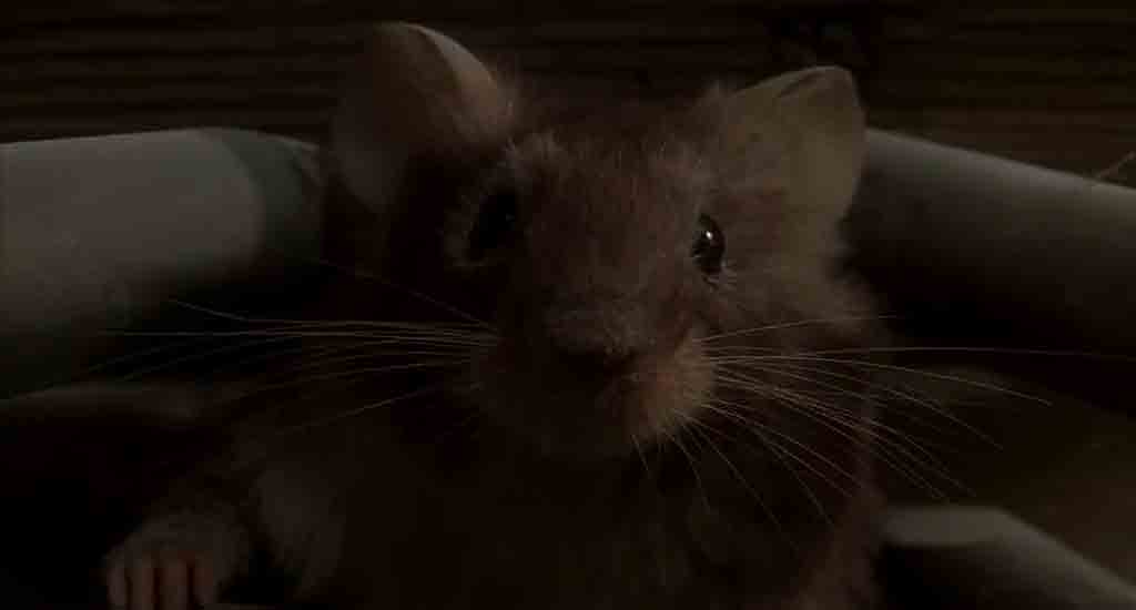 Single Resumable Download Link For Hollywood Movie Mousehunt (1997) In  Dual Audio