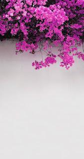 Wallpaper wa bunga HD
