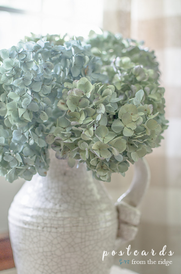 dried hydrangeas in a white crackled pitcher