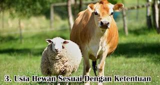 Usia Hewan Sesuai Dengan Ketentuan merupakan salah satu kriteria hewan yang dapat disembelih saat Idul Adha
