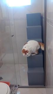 gatos subindo