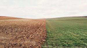 Peran koloidal tanah dan bahan organik tanah dalam mengatur unsur hara tanaman mencangkup beberapa kriteria yakni ditinjau dari mineral liat dan koloid organik, pertukaran kation dan anion, keasaman tanah, bahan organik tanah dengan prosesnya, serta pengaruh bahan organik tanah terhadap kesuburan tanah