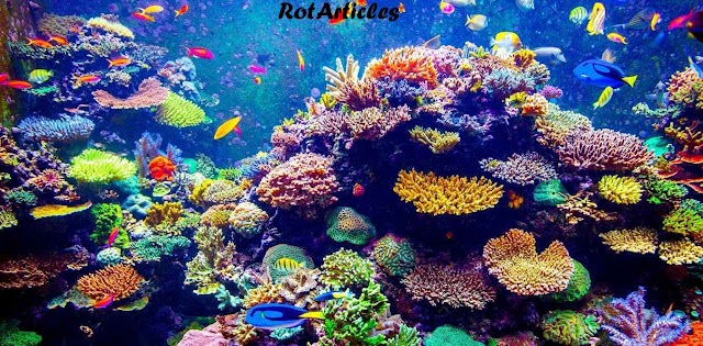 THE MAGNIFICENT CORAL REEFS