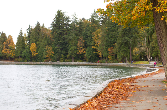 stanley park at the beginning of fall