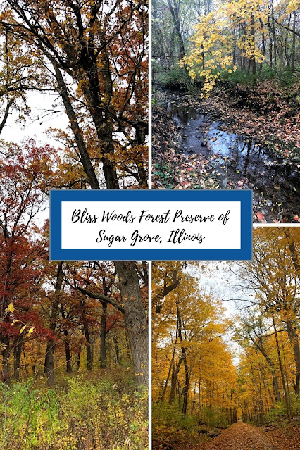 Blissful Forest Bathing in Bliss Woods Forest Preserve of Sugar Grove, Illinois