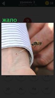 на руке человека осталось жало от пчелы