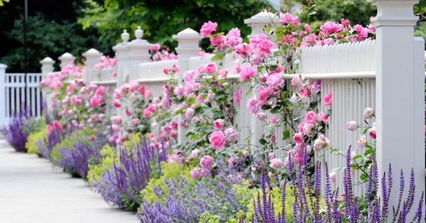 Beautiful Plants You Can Grow Instead Of A Fence 101